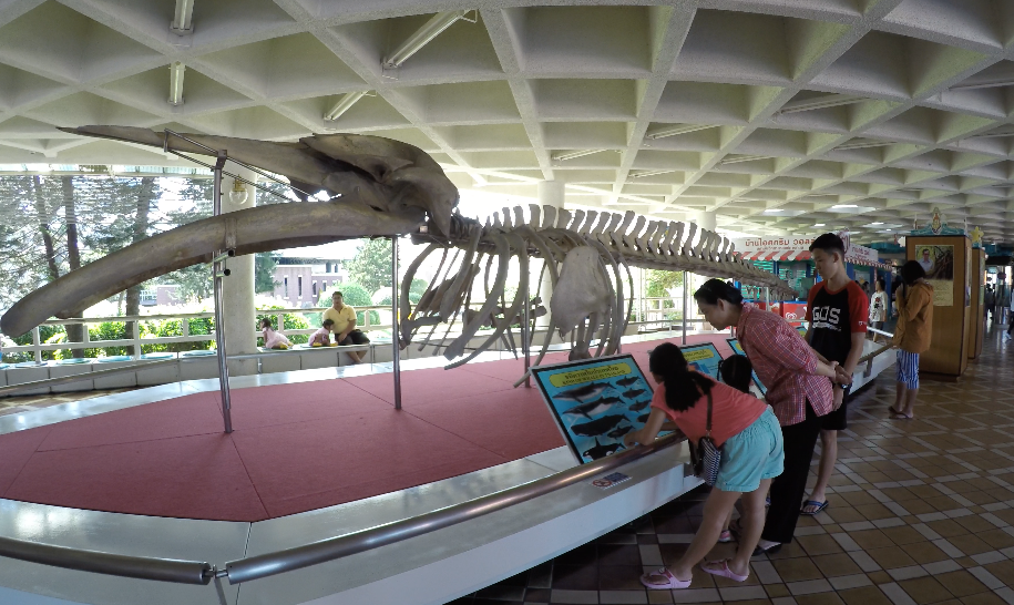 Whale skeleton - This whale was washed up on Bang Saen Beach